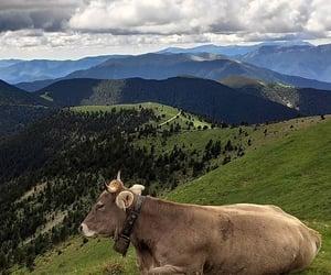 Animales, cow, and naturaleza image