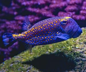 dark purple, fins, and underwater image