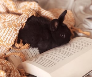 adorable, animals, and black image