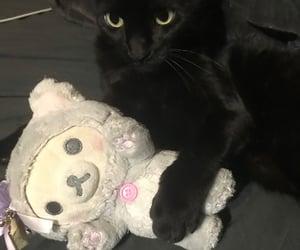 black cat, cat, and emo image