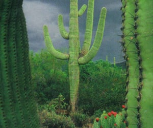cactus, photography, and theme image