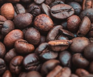 beans, brown, and caffeine image
