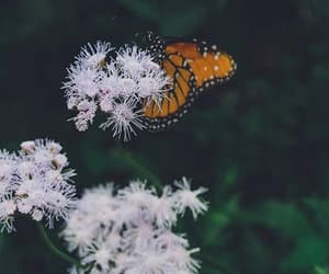 butterflies, flower, and flowers image