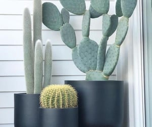 art, cactus, and decorated image