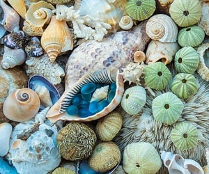 beach, siren, and conch image