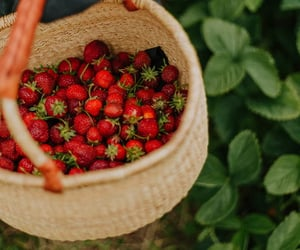 basket, berries, and forest image