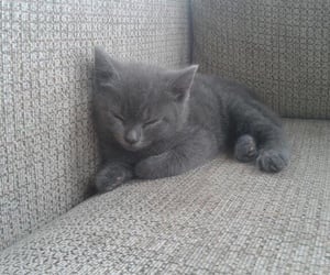 cat, cute cat, and gray image
