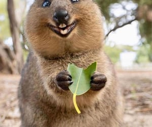 animal, smile, and cute image