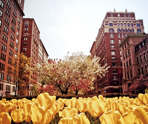 city, flowers, and nyc image
