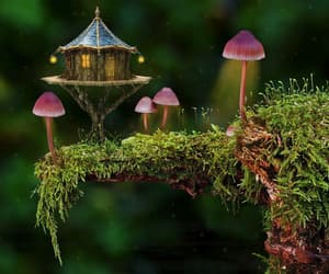 enchanted, Fairies, and fairy image