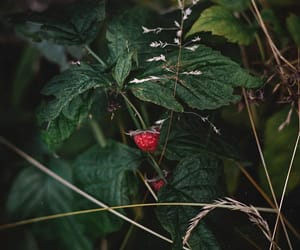 fruit, photography, and summer image
