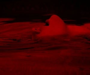 dark, deep, and red image