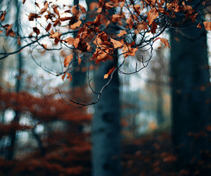 photography, autumn, and tree image