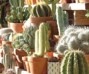 alive, cacti, and decor image