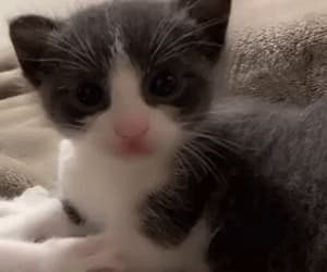 cat, cats, and gif image