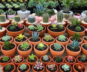 plants, cactus, and girls image