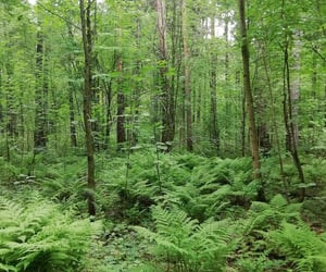 aesthetic, forest, and green image