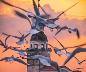 Flying, istanbul, and pigeons image