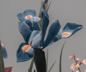 flowers, theme, and blue image