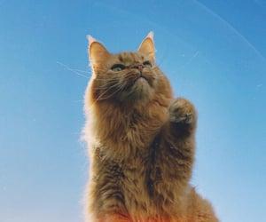 analog, awsome, and cats image