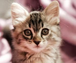 animal, cat, and gatito image