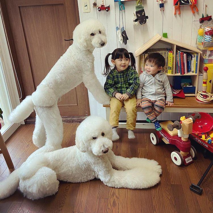 dog, kids, and kids and dog image