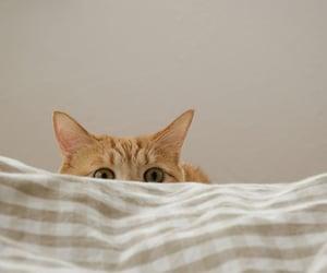 cat, orange cat, and ligth brown image