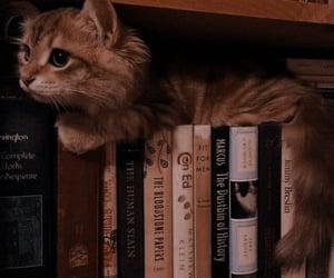 cat, books, and kitten image