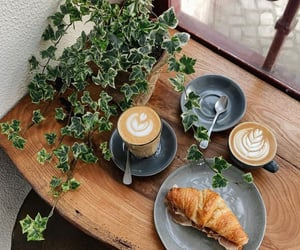 coffee, food, and plant image