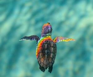 turtle, rainbow, and animal image