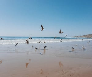 beach, birds, and ocean image