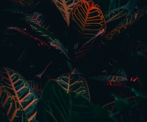 aesthetic, plant, and greenery image