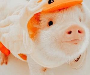 Animais, filhote, and animal image