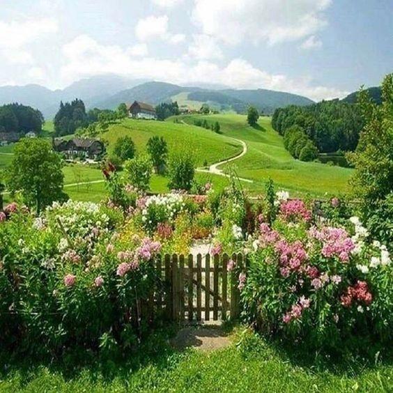 flowers, nature, and cottagecore image