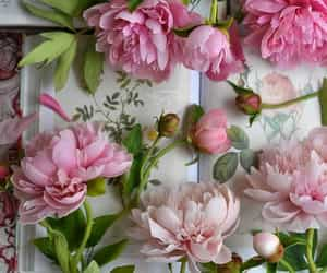 beautiful, peonies, and pink image