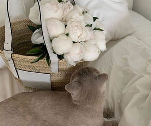flowers, cat, and white image