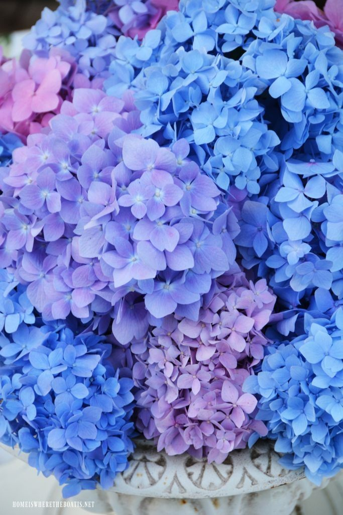 blue, flowers, and purple image