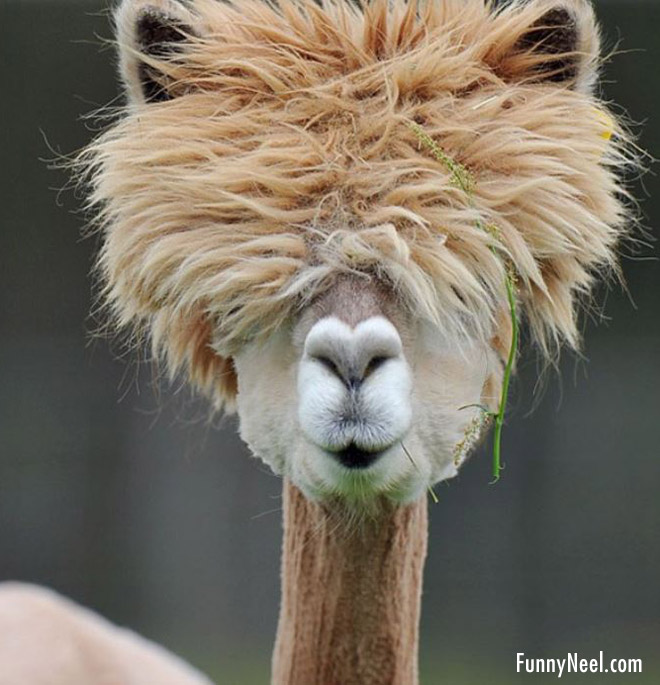 funny, funny animal, and funny animal hairstyle image
