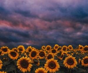 aesthetic, amazing, and beautiful photography image