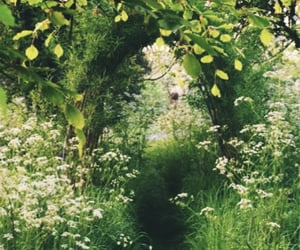 fairytale, path, and flora image