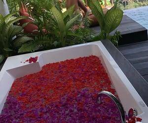 bali, bath, and petals image