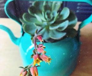 decoracion, maceta, and flores image