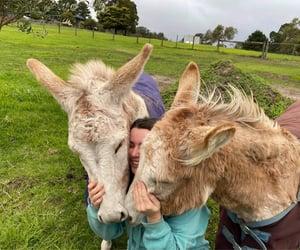 donkey and donkey cuddles image