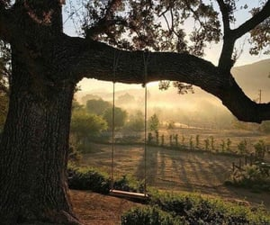 nature, tree, and swing image