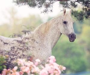 blanco, caballo, and nature image