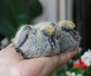 animals, birds, and fluffy image