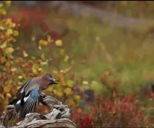 gif, matrix style, and bird & hawk image