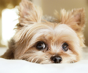 animal, bokeh, and dog image