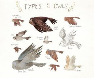 art, drawing, and owls image