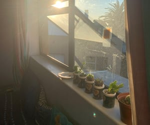 cacti, cactus, and succulent image